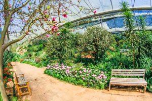 gardening_trend1